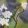 renilde-driessen-voorjaarsbloemen