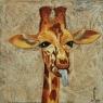 hanrietteboogers-giraf