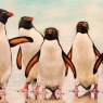 theacronelissen-pinguins