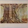 carla-bastiaansen-oude-boom