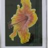 adiana-elfferich-hibiscus