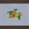 jose-roestenburg-appeltjes