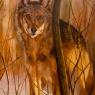 thea-cornelissen-wolf