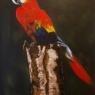 wil-dekkers-papegaai-en