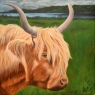 Amy Renders Schotse Hooglander acryl