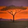 Andre van Leeuwen Acaciaboom acryl