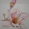 Francine van Vlerken Magnolia aquarel